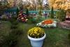Бал хризантем в Харькове
