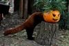 Хеллоуин в британском зоопарке
