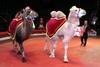 В цирке Днепра сыграли обезьянью свадьбу