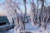 ледяные скульптуры Джошуа Новицки
