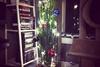 Как уберечь новогоднюю елку от проказника кота