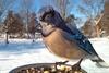 птицы крупным планом