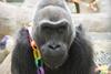 В США умерла старейшая в мире горилла