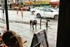 собаки, которые преданно ждут своих хозяев