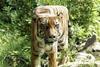 Животные с кубическими формами тела