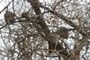 На окраине Днепра поселились совы