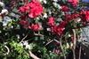 ботанический сад гришка