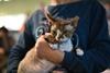 конкурс красоты среди кошек в киеве мистер мурр