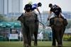 королевский турнир по поло на слонах