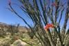 цветение диких цветов в сша