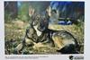 фотовыставка кошек и собак с передовой в днепре
