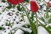 Харьков засыпало снегом в апреле