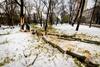 повалено рекордное количество деревьев- практически столько, сколько высадили