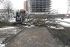 Деревья разбили 17 авто