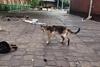 бродячие коты