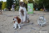 Дом для бездомных кошек в Харькове