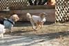детский сад для щенков