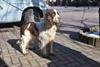 собаки Одесса
