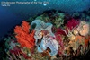 конкурс подводных фотографий The Underwater Photographer of the Year 2020