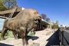 ремонт в Киевском зоопарке