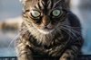 Grumpy Kitzia