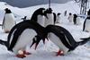 Антарктика весной