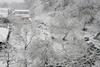 Снег в Дубно