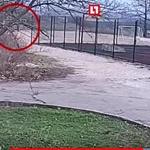 Видео: в Севастополе упавшие футбольные ворота убили 13-летнего школьника