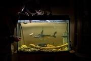 Коллекционер подводных хищников: Некоторые рыбы могут стоить, как спорткар