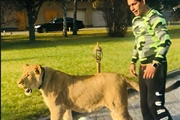 По следам депутатского льва: в Украине столько хищников, что можно заселить Азию и Африку