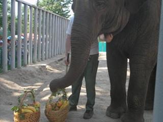 Слониху Тенди поздравил бегемот