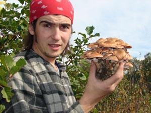 В съедобных грибах много пестицидов