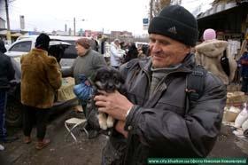 В городе негде продавать собак и кошек
