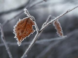 В Курске ожидается похолодание