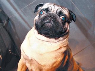 Викторина: «Породы собак» [Объявлен победитель]