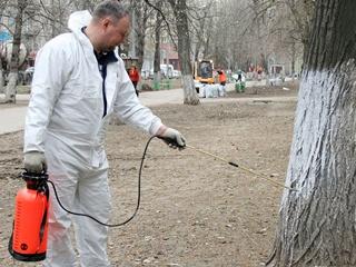 У Кличко пояснили, почему запретили белить деревья в Киеве