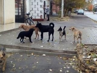 В Киеве за три дня насчитали более трех тысяч бродячих собак
