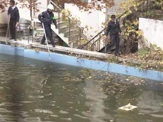 В Японии дикие кабаны сорвали уроки в школе и устроили плавание в бассейне