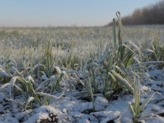 Завтра, 12 января, морозы усилятся по всей стране