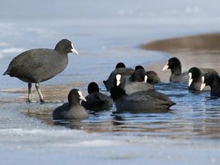 В Херсонской области тысячи птиц погибли от пастереллеза