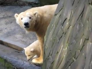 В Николаевском зоопарке белый медвежонок впервые вышел в люди