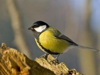 За 10 лет браконьеры вывезли из Украины  птиц на 2,5 миллиона долларов