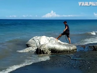 На пляж Филиппин выбросило неизвестное  волосатое  существо
