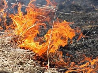 В Чернобыльской зоне начался новый пожар