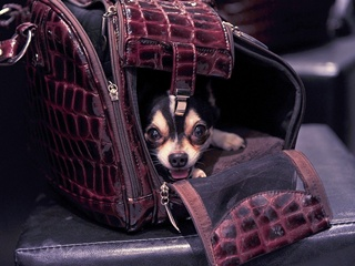 Собака открыла багажный отсек самолета, летевшего в Москву