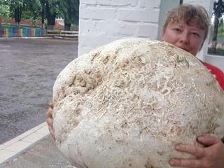 Под Киевом нашли гриб весом почти 18 кило