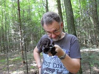 В Прикарпатье нашли черные лисички