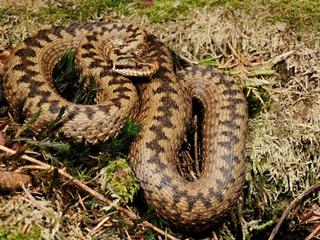 На Львовщине в реанимацию попал мальчик, которого укусила змея