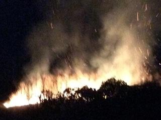Французский миллионер заявил, что в Шабо подожгли его виноградники