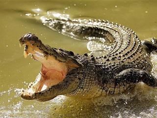 В Австралии крокодил попытался запрыгнуть в лодку к рыбакам